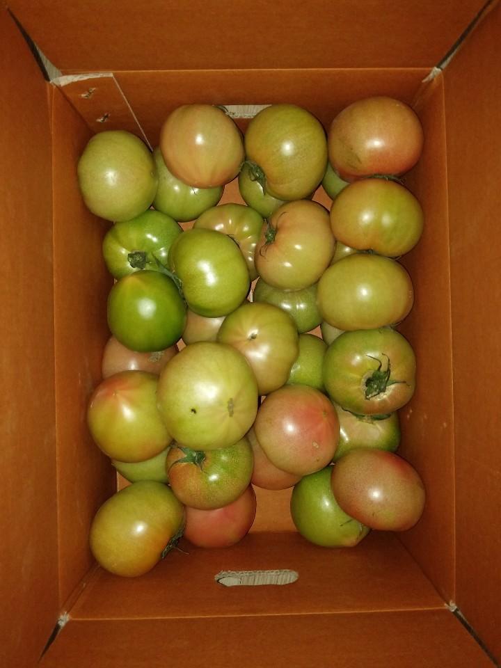 부산 강동 토마토 5kg
