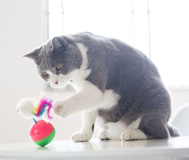 오뚜기 고양이 장난감