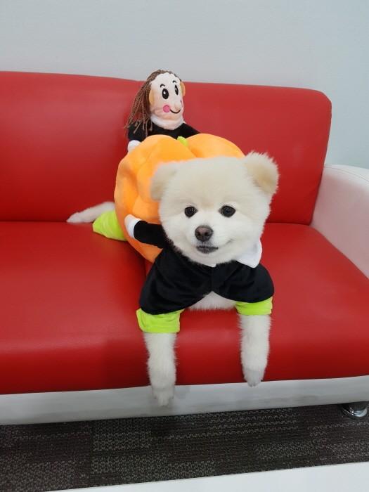 강아지 할로윈 옷