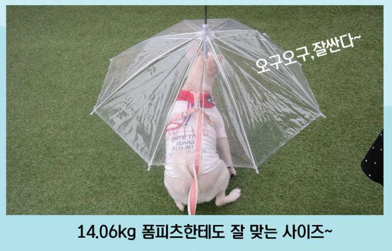 ★ 반려견 산책우산 ★