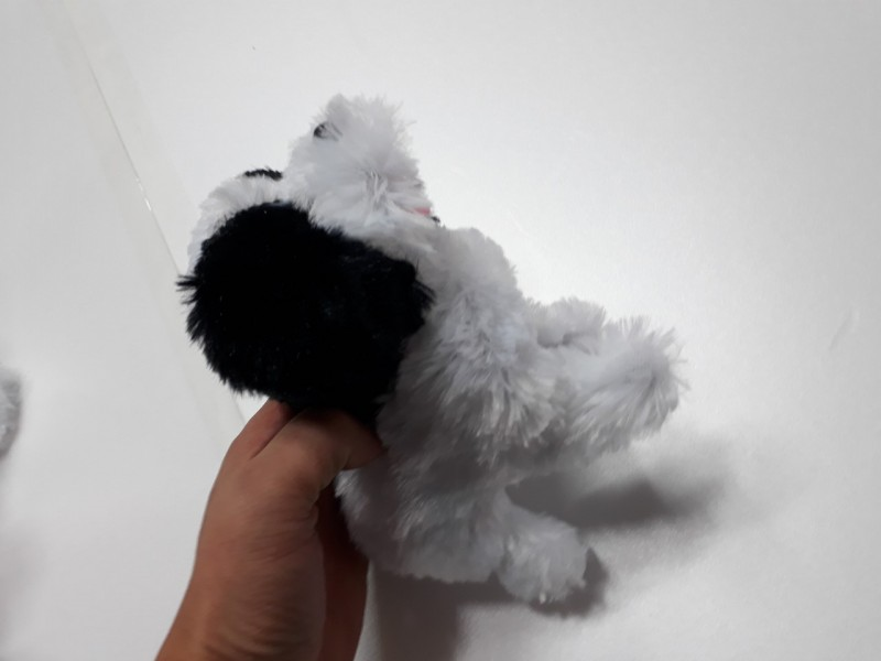 시츄 강아지(kc인증)
