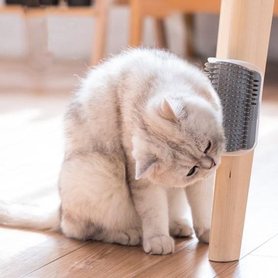 고양이 부비부비 셀프 브러쉬